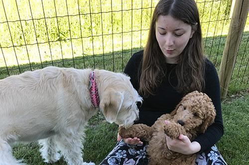 Test af kommende terapihund